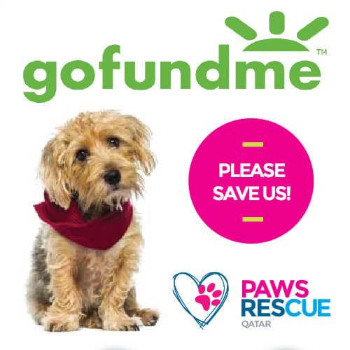 Please help save Paws Rescue Qatar!