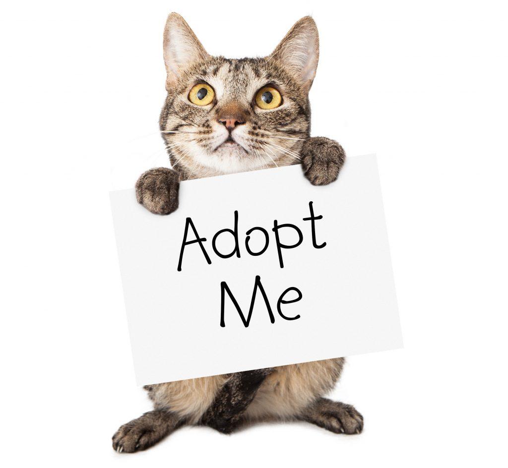 cat-adoption
